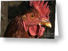 Domestic Chicken Greeting Card