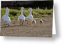 Domestic Geese With Goslings Greeting Card