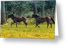 Domestic Horses Greeting Card