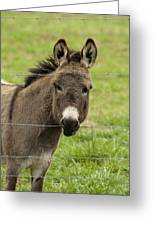 Donkey - The Beast Of Burden Greeting Card