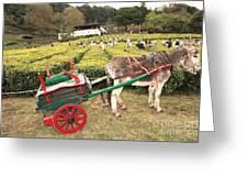Donkey And Tea Gardens Greeting Card