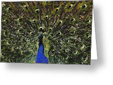 Dont Look Back Greeting Card