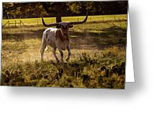 Don't Mess With Texas ..... Long Horns That Is  Greeting Card