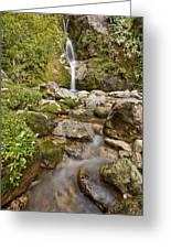 Dorothy Falls Near Lake Kaniere New Greeting Card