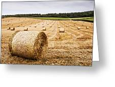 Dorset Hayfield Greeting Card