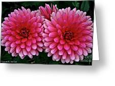 Double Dahlia Greeting Card