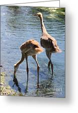 Sandhills Double Dipping Greeting Card