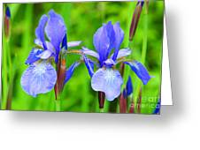 Double Iris Greeting Card