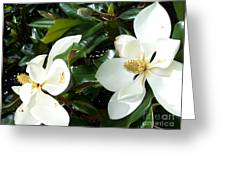 Double Magnolia Greeting Card