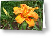 Double Old Fashion Day Lily Greeting Card