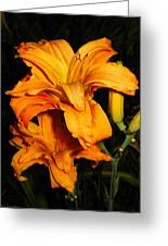 Double Orange Daylilies Greeting Card