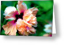 Double Peach Hibiscus Five Greeting Card