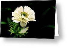 Double Poppy Anemone Greeting Card