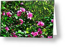 Double Rose Of Sharon Greeting Card