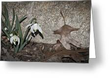 Double Snowdrops Greeting Card