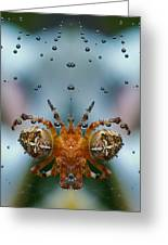 Double Spider Greeting Card