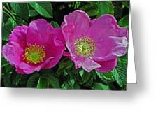 Double Wild Rose Greeting Card