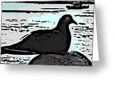 Dove At The Beach Greeting Card