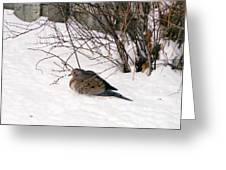 Dove In The Snow Greeting Card