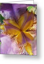 Down Into The Iris Greeting Card