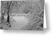 Down The Path Greeting Card