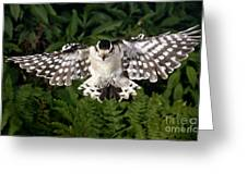 Downy Woodpecker In Flight Greeting Card