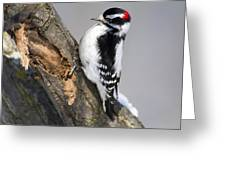 Downy Woodpecker Perched In A Tree Greeting Card