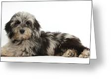 Doxie-doodle Puppy Greeting Card