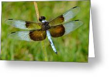 Dragon Fly Grass Greeting Card