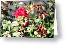 Dragon Fly Rose Bud  Greeting Card