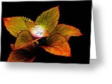 Dragon Plant Patronus Greeting Card by Michael Taggart