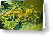 Dragon Seahorse Greeting Card