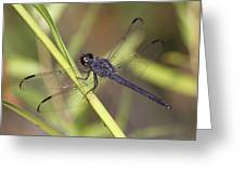 Dragonfly - Little Boy Blue Greeting Card