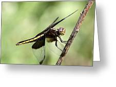 Dragonfly - Yellow Stripe Greeting Card