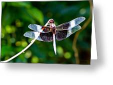 Dragonfly 0002 Greeting Card