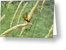 Dragonfly-2 Greeting Card