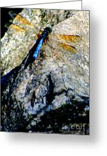 Dragonfly Blue Greeting Card by Maria Scarfone