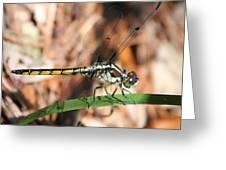 Dragonfly Closeup Greeting Card
