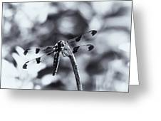 Dragonfly In The Sun Greeting Card