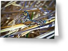Dragonfly Love Greeting Card