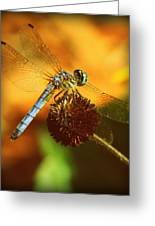 Dragonfly On A Dried Up Flower Greeting Card