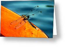 Dragonfly On A Paddle Greeting Card