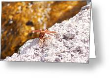 Dragonfly On Larva Rock Greeting Card