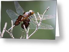 Dragonfly On The Tree Greeting Card