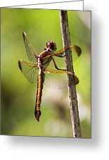 Dragonfly Photo - Yellow Dragon Greeting Card
