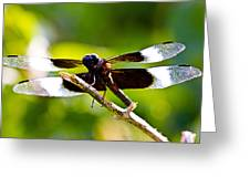Dragonfly Stalking Greeting Card