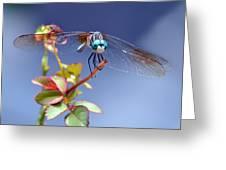 Dragonfly Visit Greeting Card