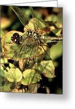 Dragonfly Wingspan Greeting Card