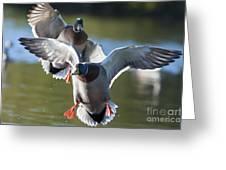 Dramatic Ducks Greeting Card