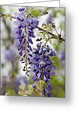 Draping Lavender Purple Wisteria Vines Greeting Card